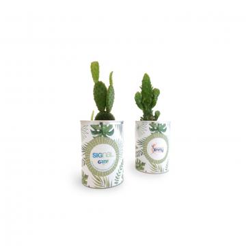 Canette à cactus